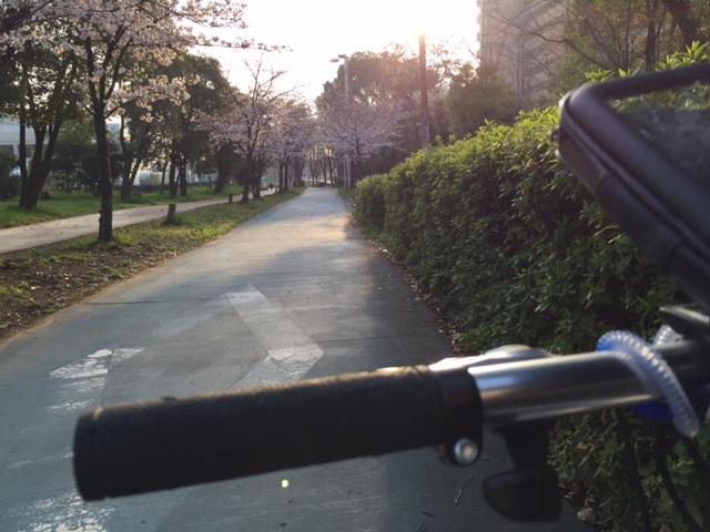 さくらの中を自転車通勤