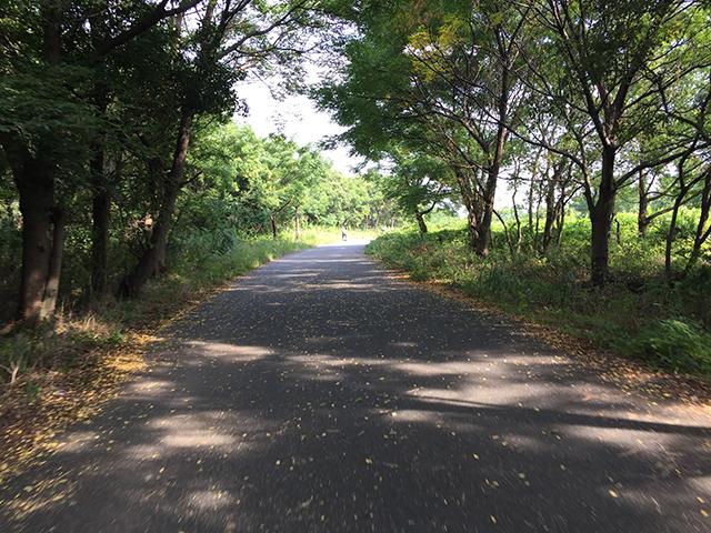木漏れ日の自転車道