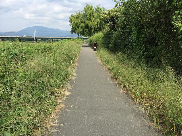 草が生い茂る自転車道